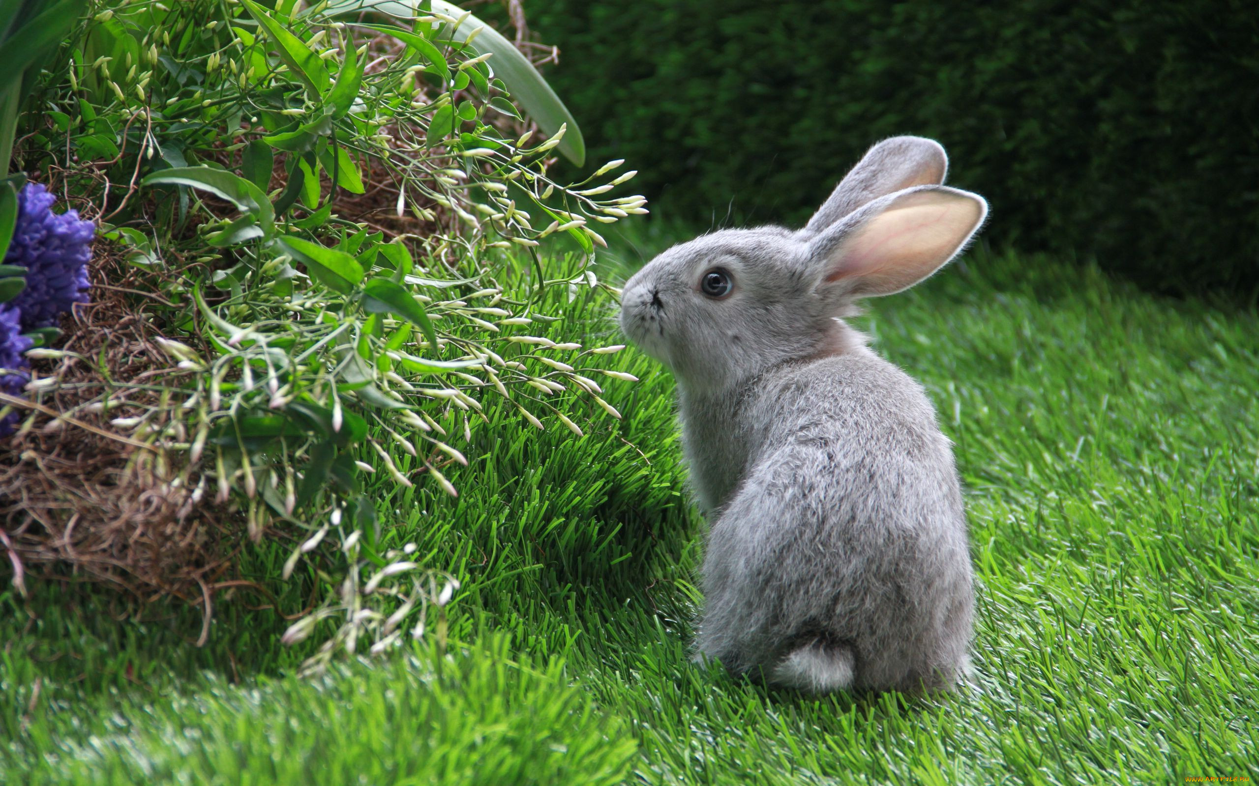 Кролики живые картинки